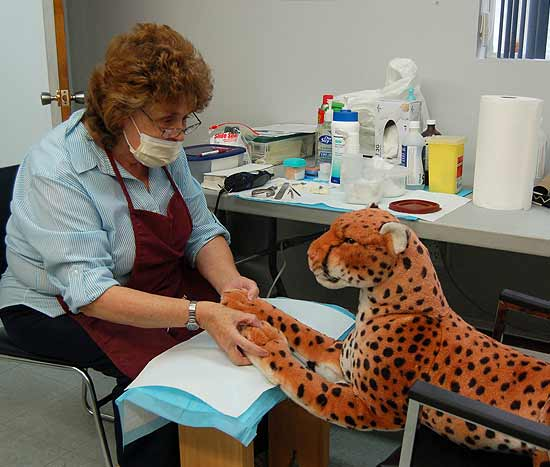 Now volunteer, former Foot Clinic Nurse, Brenda Vaughan attends to a client! (a toy leopard)